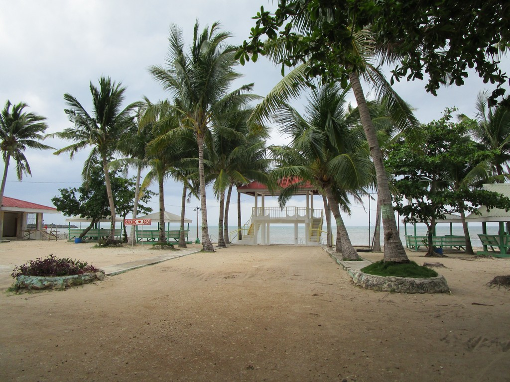 kota fort coconut trees