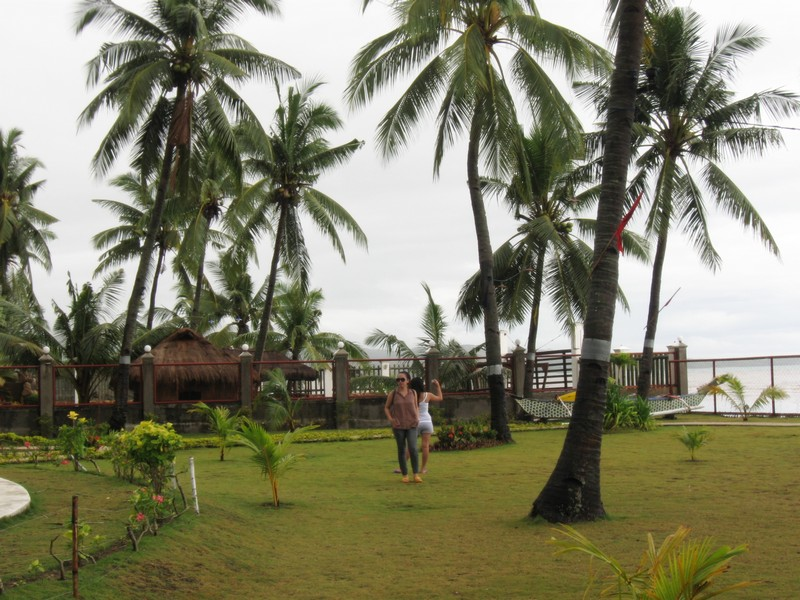 green grass and tall coconut trees
